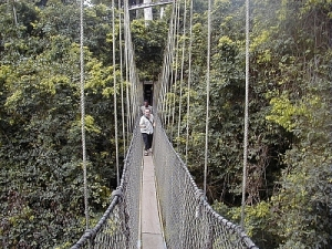 natural_park_canopy_400